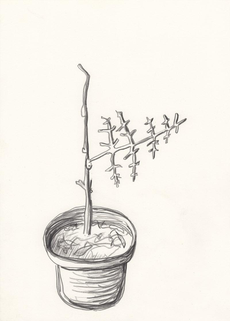 Plant Prosthetic